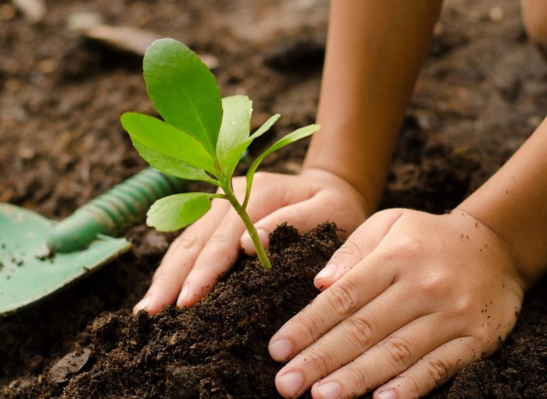 5000 trees to be planted by GIOVANI group
